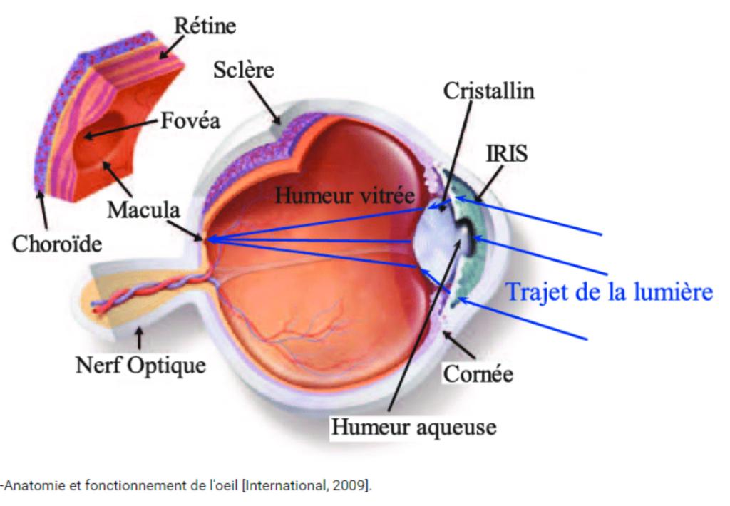 DMLA : détail d'un oeil